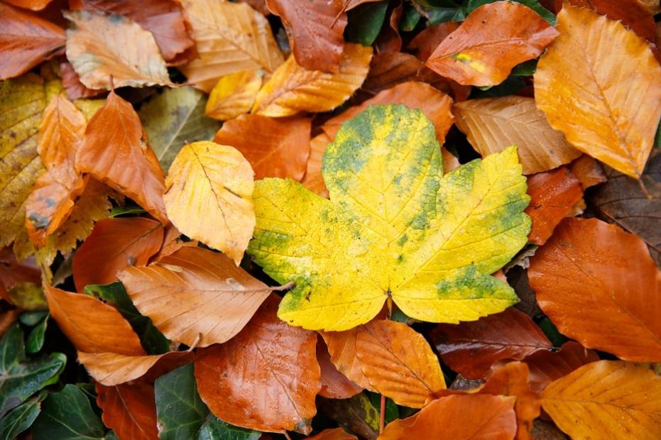 beautiful_autumn_hitchin_photography_sharon-cooper_0002