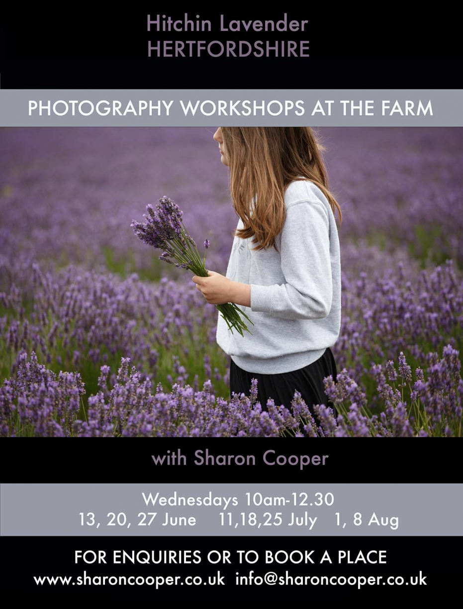 Photography Workshops at Hitchin Lavender