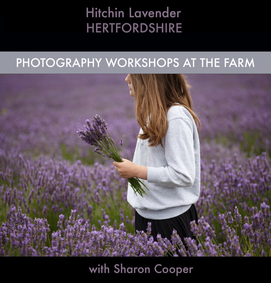 Hitchin Lavender Photography workshops