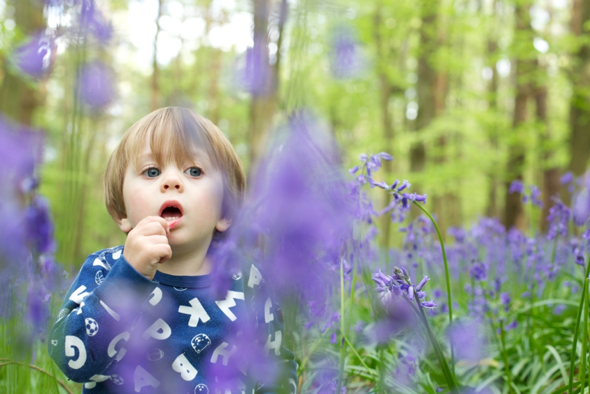 Child-playing-in-bluebells-Hertfordshire-by-SharonCoooper.co.uk_0023